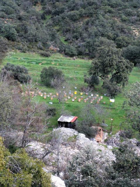 Panales de abeja junto a la Senda de las Cascadas del Hervidero