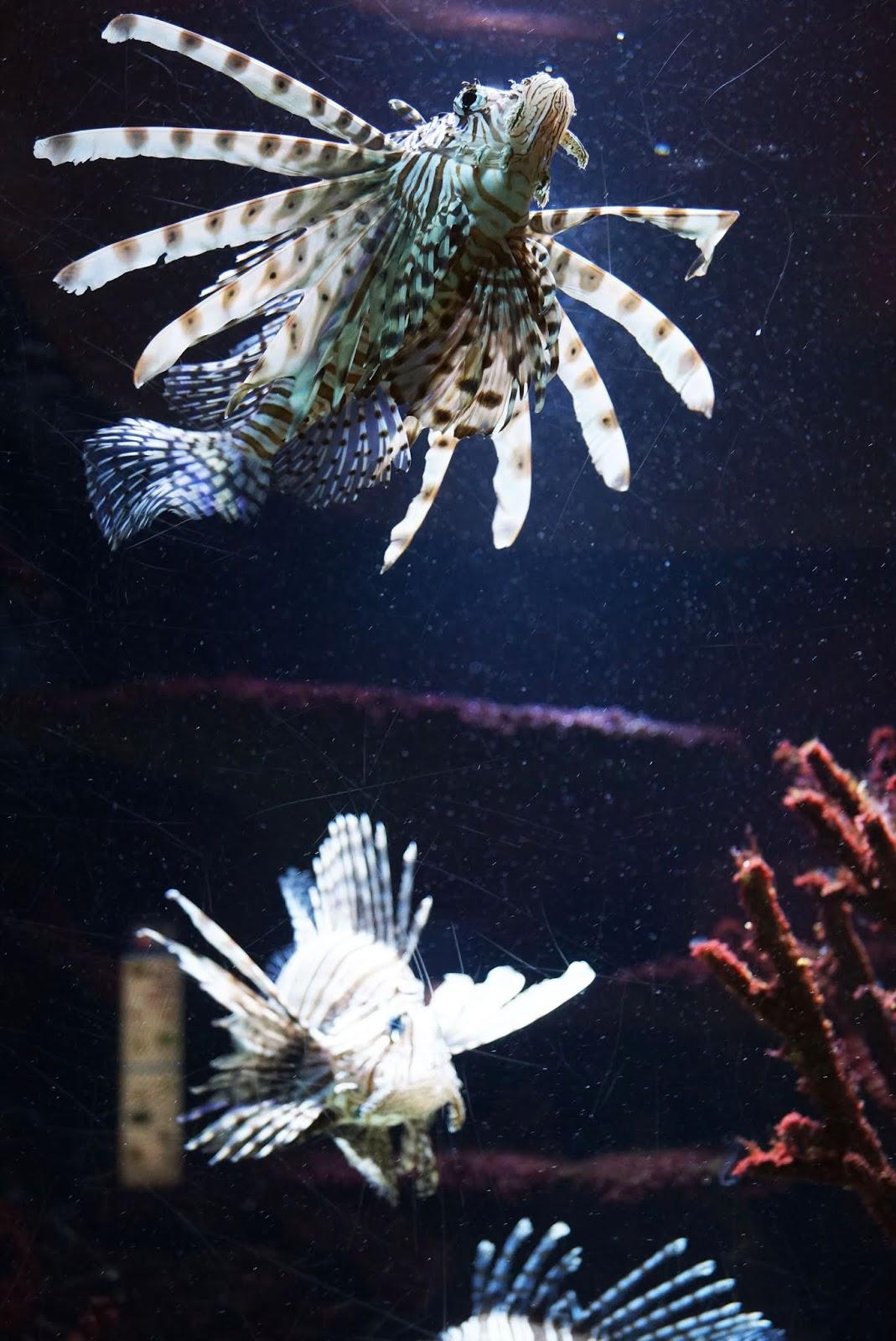 aquarium_berlin