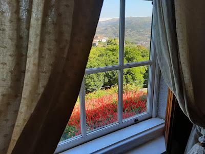 vista da janela da Fundação Eça de Queiroz