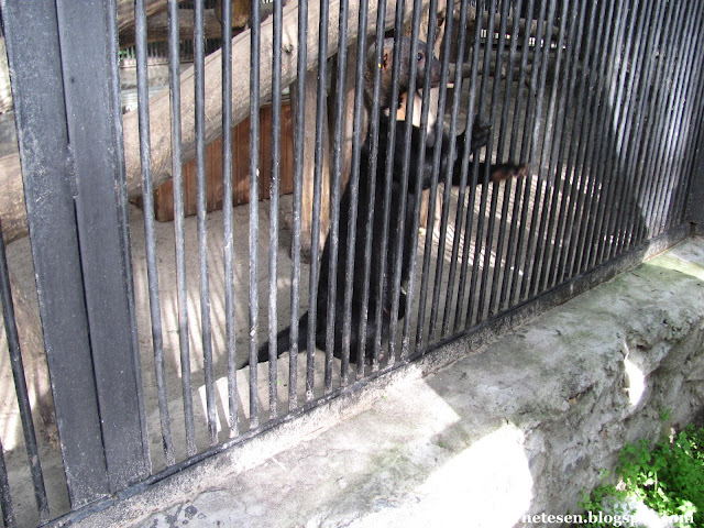 Новосибирский зоопарк: тайра