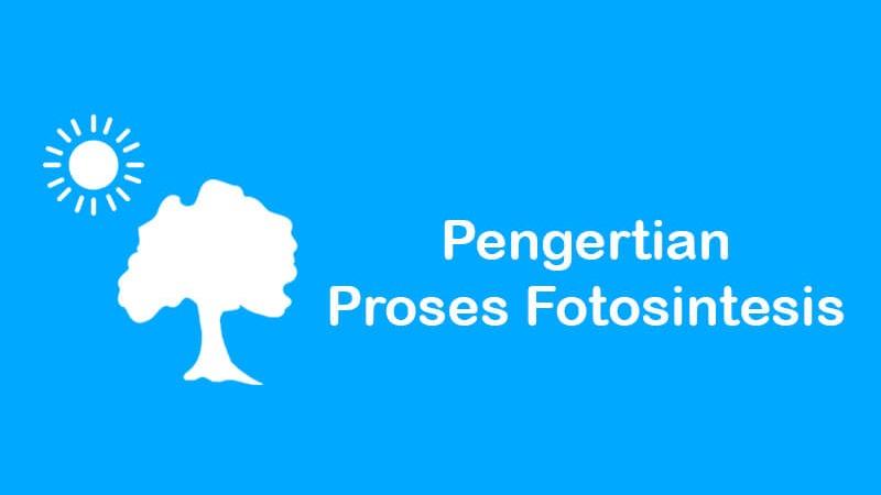pengertian fotosintesis beserta proses dan fungsinya
