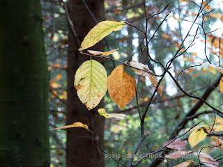 letzte Blätter am Baum: Foto von unabhängiger Stampin Up Demonstratorin in Coburg susis basteltipps