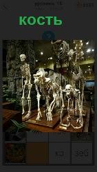 460 слов 4 в музее на постаменте стоят скелеты из костей разных животных 19 уровень