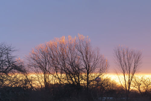 sunrise with glowing trees