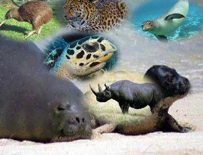 انقراض,خطر,الانقراض,مهدد بالانقراض,تغير المناخ,الباندا,الليمور,انسان الغاب,قرد العنكبوت البني,وحيد القرن الأسود,التعلب الطيار,حيوانات منقرضة