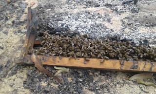 Αντιεξουσιαστής έκλεβε το μέλι και έκαιγε τα μελίσσια