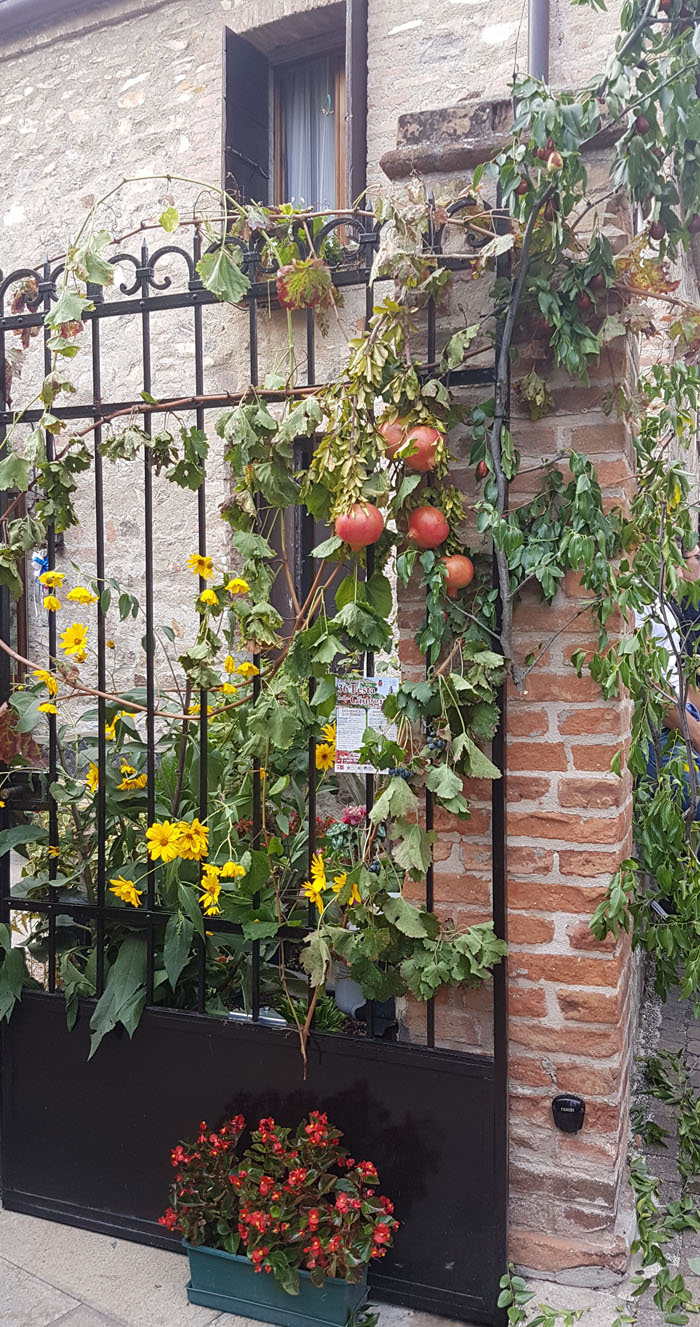 Arquà Petrarca]: wonderful autumn colours | Home Shabby Home ...