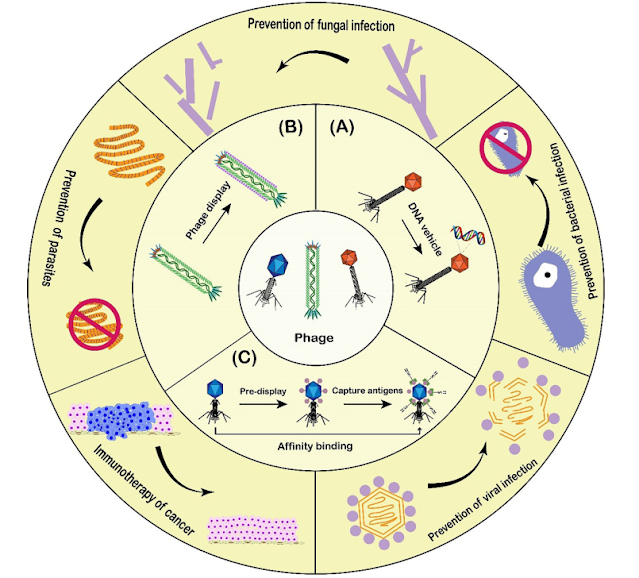 Design and applications of phage-based vaccines