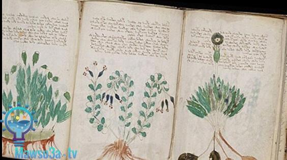 مخطوطة فوينيتش