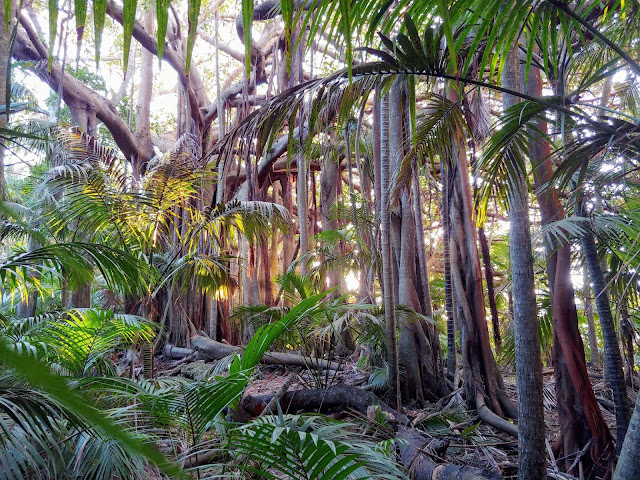 Deep roots of the 'Anthropocene' can be found in tropical forests