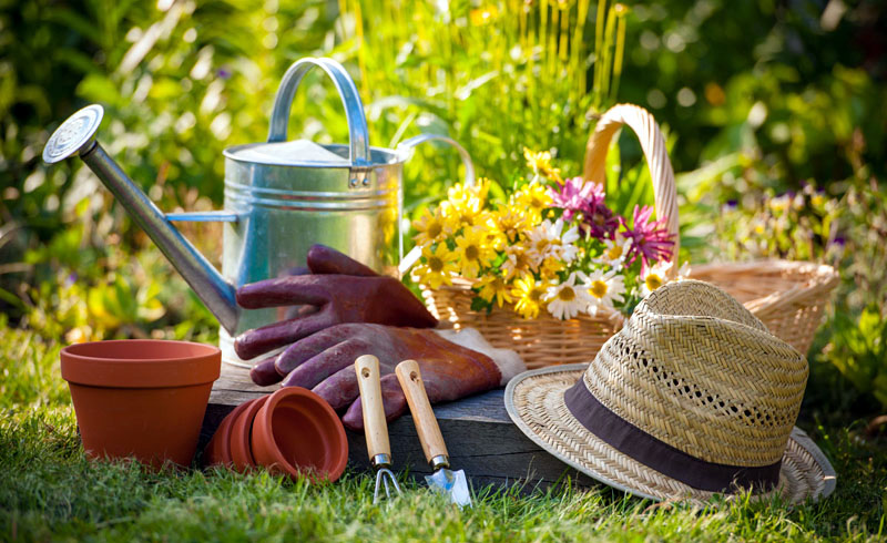 11 Things to Do in August to Get Your Garden Ready for Fall