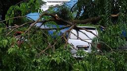 Hujan Badai, Satu Mobil Milik Warga Rusak Diterpa Pohon Tumbang di Kota Bengkulu