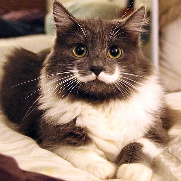 Hamilton The Hipster Cat-1