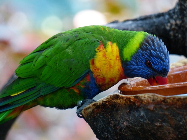 What do parrots eat? Parrot and bird facts