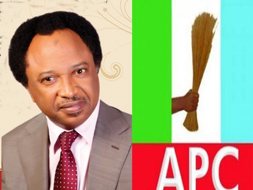 Image result for What APC must do to win election – Shehu Sani