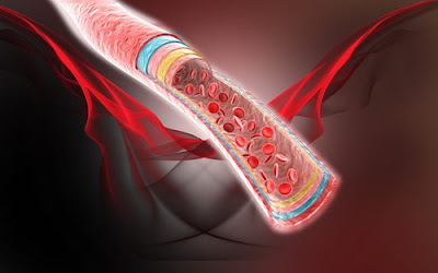 Top 5 infusions pour maintenir une circulation sanguine saine
