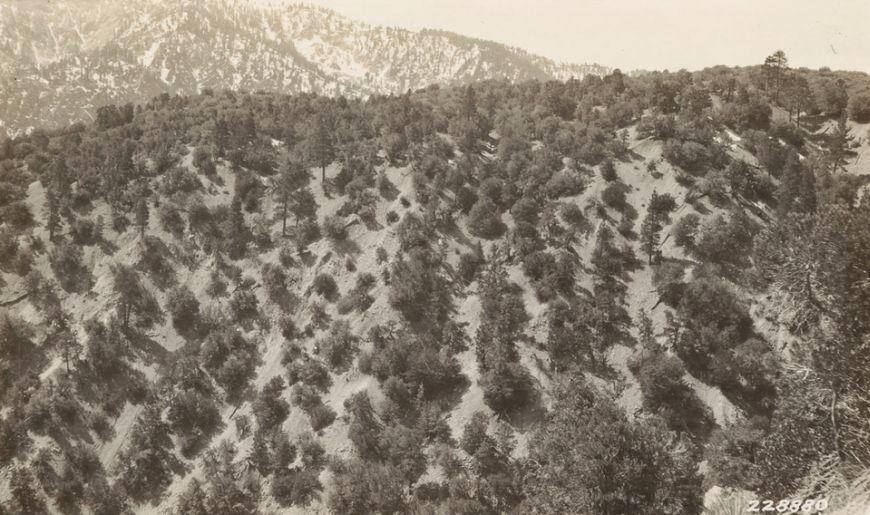 Future Plants By Randy Stewart Mountain Mahogany