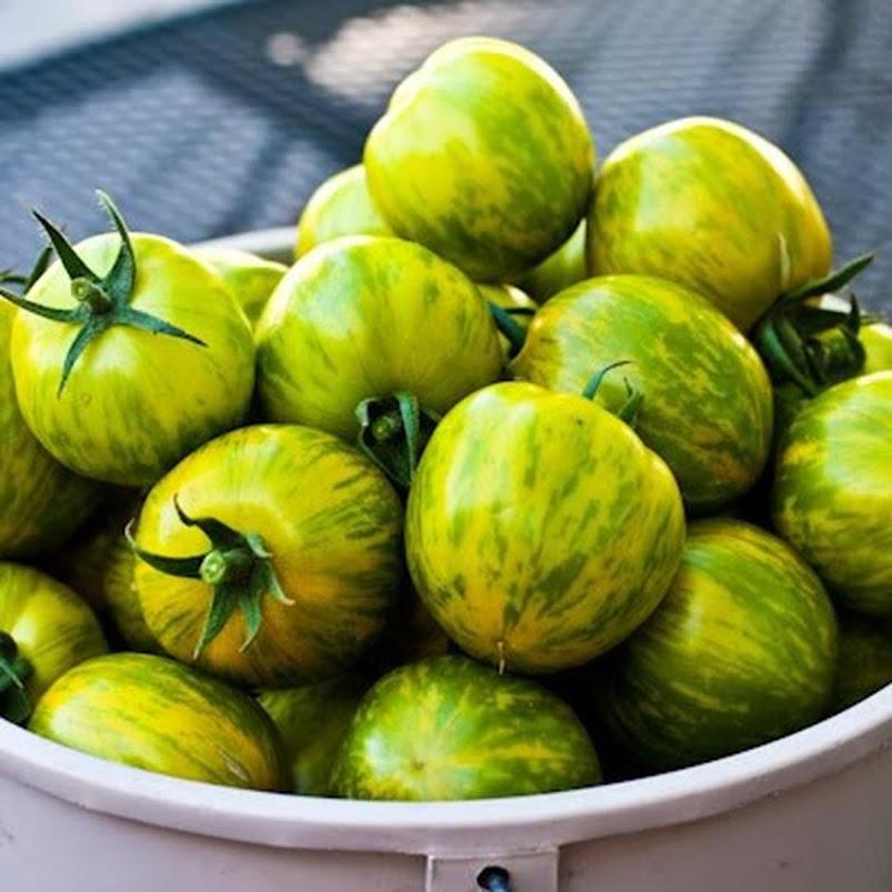 Amefurashi Bibit Benih Seeds Tomato Green Zebra Sayur Tomat Hijau Unik Mudah TUmbuh