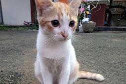 5 Tips Sederhana Merawat Kucing Rumahan
