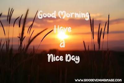 good morning wallpaper photo