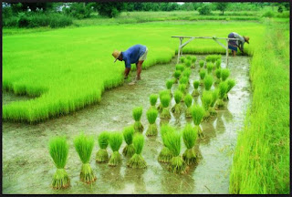 Popular Agriculture Related Schemes of Central and State Government in India