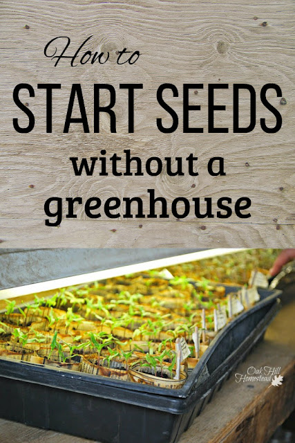 You might think all is lost if you don't have a greenhouse. Here's how to find the best location for starting seeds inside your home, plus some DIY greenhouse alternative ideas.