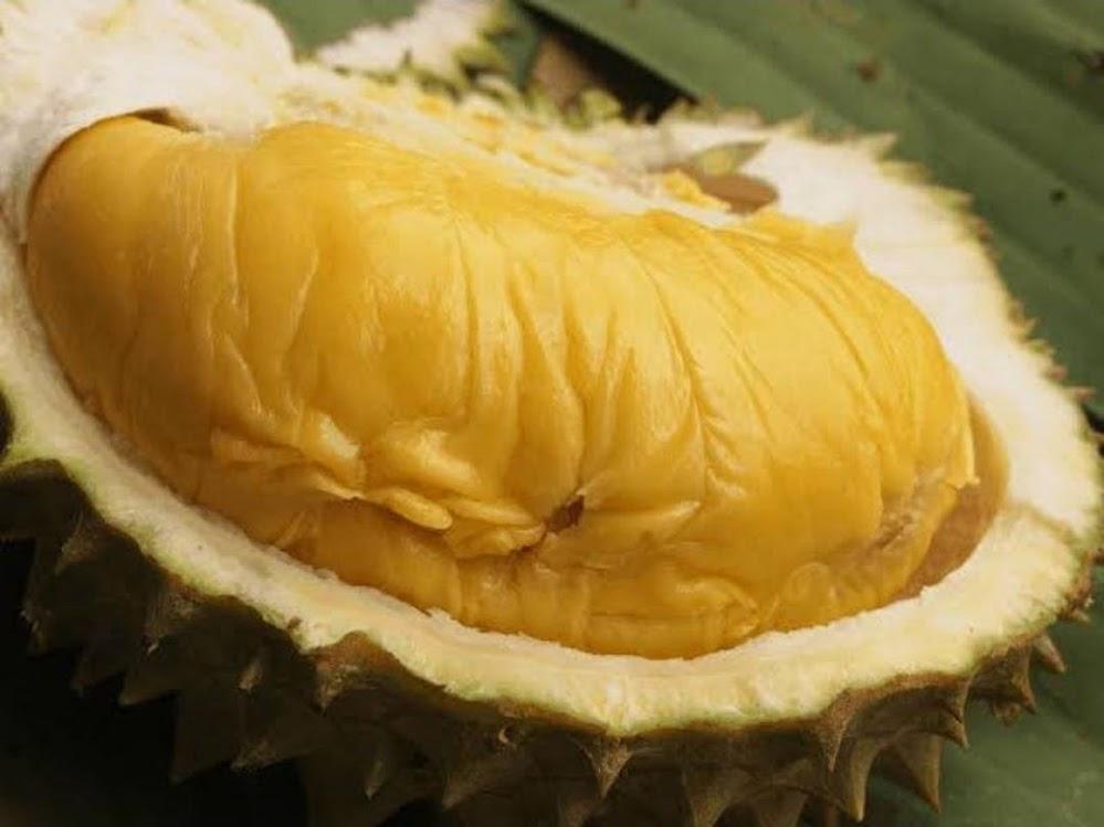 Bibit Durian Bawor Banyumas Okulasi Aceh