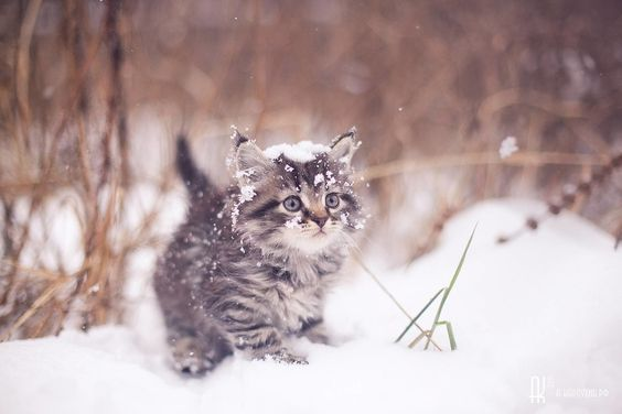 Beautiful winter scene with kitten in snow