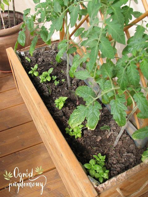 ochrona roślin, choroby i szkodniki, ogród przydomowy