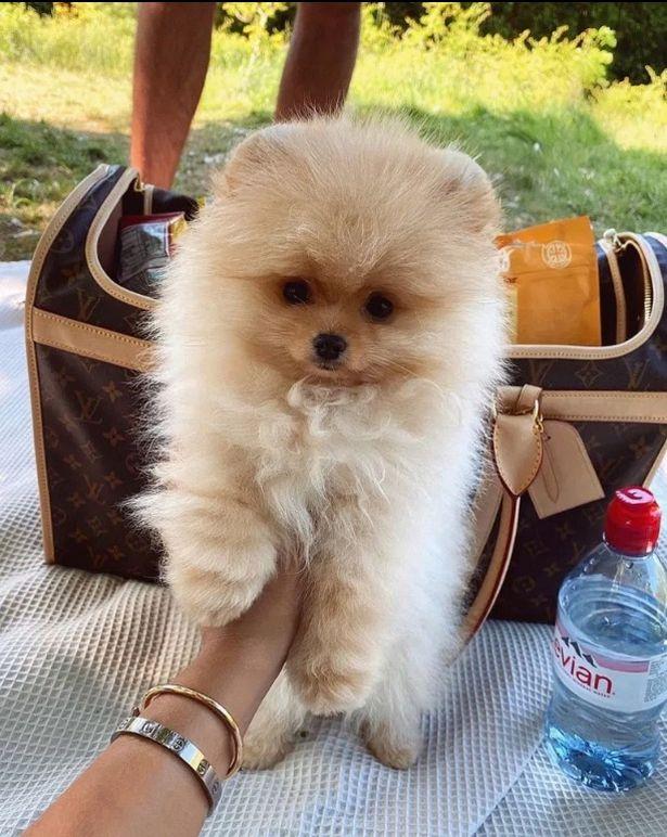 Molly-Mae Hague 'QUITS social media' after puppy's death