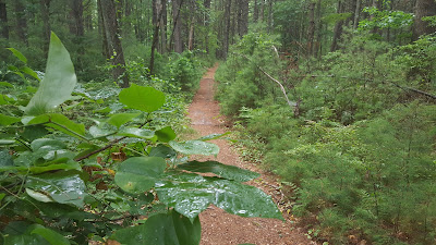 on a trail in the Franklin Town Forest off Summer St