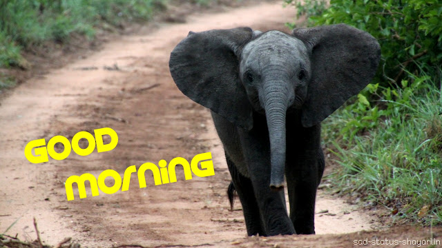 good morning images elephant