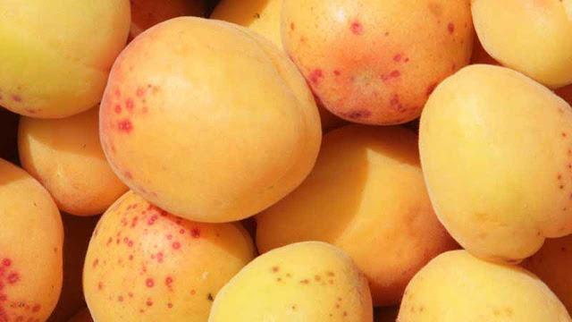 gambar buah aprium