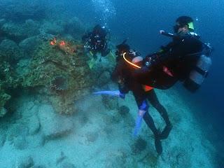 2021年5月5日の柏島ダイビング