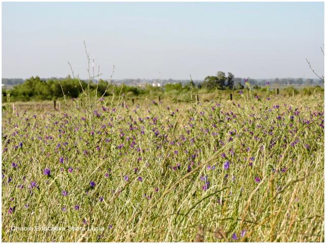 Vegetación de la pradera - Chacra Educativa Santa Lucía