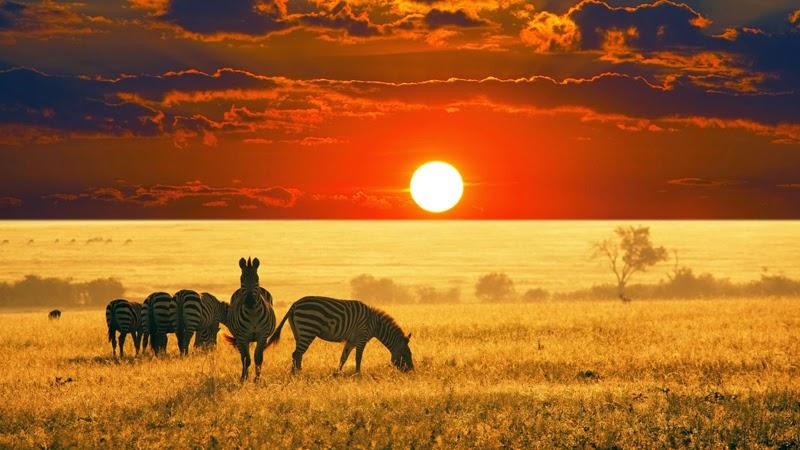 تصوير الأدغال الإفريقية