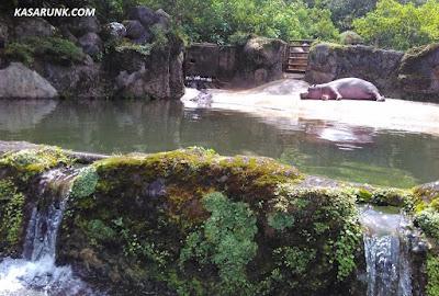 jalan jalan, kebun binatang, taman safari