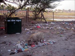 Des poubelles à Khajuraho!