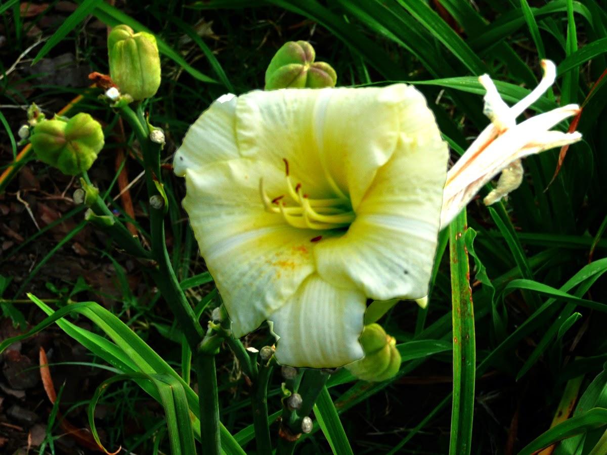 Flor con pistillos de colr blaco y amarillo