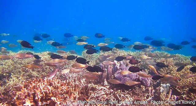 Marine Life in Warduwer beach of Raja Ampat