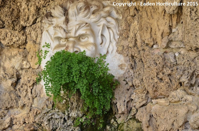 Maidenhair fern growing in mouth of marble mask