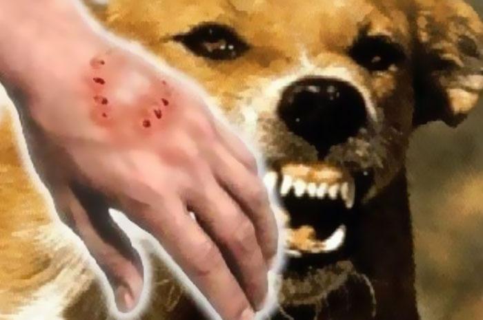 Rabies Bisa Sebabkan Korbannya Ejakulasi
