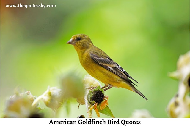 51+ American Goldfinch Bird Quotes [ 2021 ]