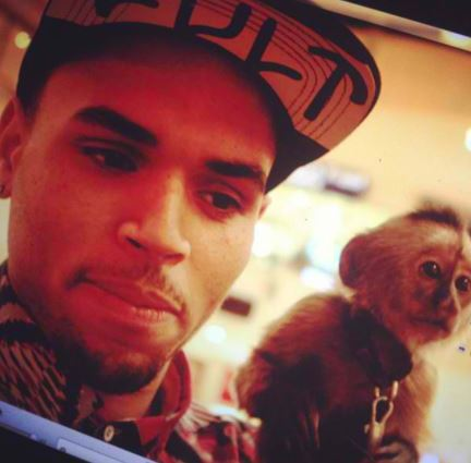 Chris Brown in trouble over 'pet monkey