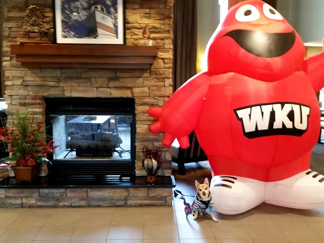 Scooby Doo (chihuahua) with WKU mascot Big Red-carmapoodale