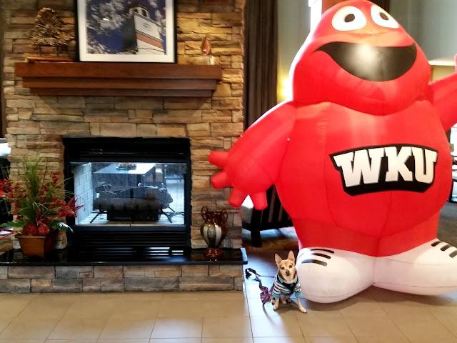 Scooby Doo (chihuahua) with WKU mascot Big Red-carmapoodale