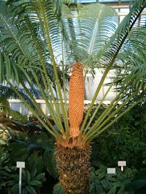 Tumbuhan Berbiji - Ciri, Struktur, Reproduksi & Klasifikasi