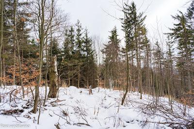 Miejsce odbicia szlaków pieszych z Dzikowca w dół w kierunku przełęczy pod Sokółką