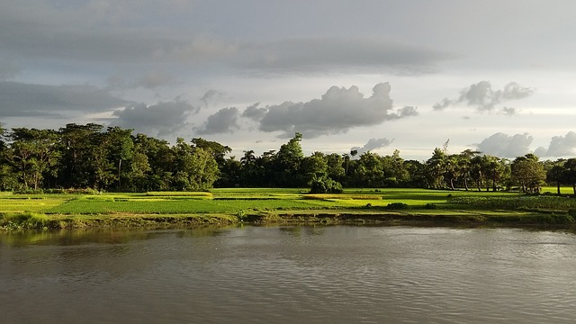 Our Village Essay for Kids and Students 300 Words - আমাদের গ্রাম