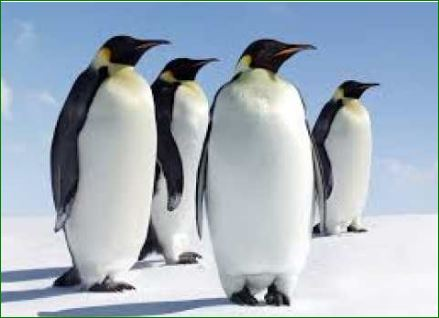 Top-5-interesting-facts-about-penguins-in-hindi